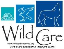Wild Care Cape Cod
